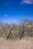 Старый сад на предпосылке голубого неба с белыми облаками Стоковое Изображение
