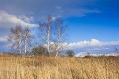 Старый сад на предпосылке голубого неба с белыми облаками Стоковые Фотографии RF