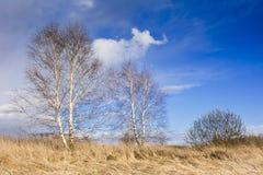 Старый сад на предпосылке голубого неба с белыми облаками Стоковое фото RF