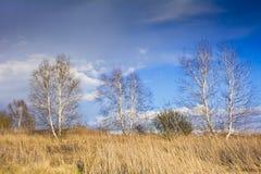 Старый сад на предпосылке голубого неба с белыми облаками Стоковые Изображения RF