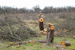 Старый сад яблони Стоковые Изображения