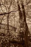Старый сад Стоковая Фотография RF