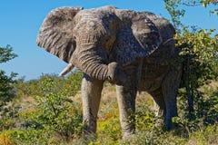 Старый слон быка стоковое фото rf