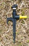 Старый Спрингер в саде Стоковое Изображение RF