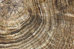 старый ствол дерева древесина текстурированная предпосылкой Индустрия тимберса Стоковая Фотография
