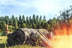 старый ствол дерева Стоковое Изображение RF