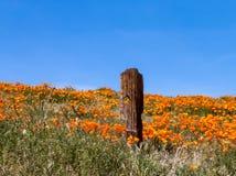 Старый столб загородки в поле мака Стоковое Фото