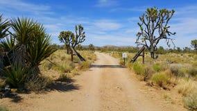 Старый строб в середине пустыни Мохаве Окруженный Иешуа Tree= s Стоковое Изображение RF