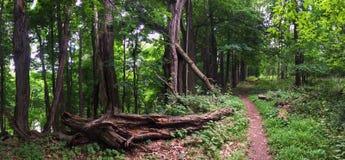 Старый след леса Стоковое Изображение RF