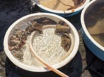 Старый традиционный рынок свежих рыб Стоковые Фотографии RF