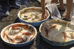 Старый традиционный рынок свежих рыб Стоковые Фото