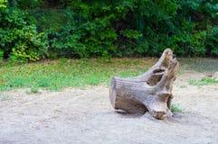 Старый тухлый пень дерева Стоковая Фотография