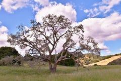 Старый дуб на горном склоне с облаками Стоковые Фото