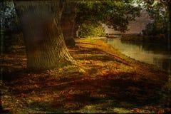 Старый дуб на Notholmen. Стоковые Изображения