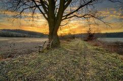 Старый дуб Стоковое фото RF