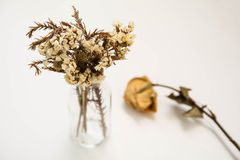 Старый цветок в стеклянной лампе с старой поднял рядом с Стоковое Фото