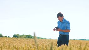 Старый человек фермера исследует образ жизни изучает в концепции человека земледелия поля Ростки пшеницы в руке фермера хуторянин акции видеоматериалы