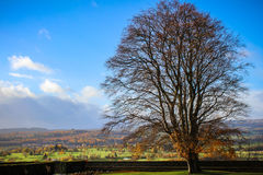 Старый шотландский ландшафт дерева Стоковая Фотография RF
