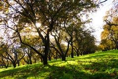 Старый яблоневый сад в осени Стоковое фото RF