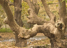 Старый fairy лес Стоковое Фото