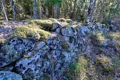 Старый stonewall предусматриванный во мхе в шведском лесе стоковая фотография