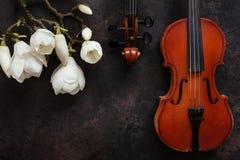 2 старых скрипки и цвести brances магнолии Взгляд сверху, конец-вверх на темной винтажной предпосылке стоковые фотографии rf