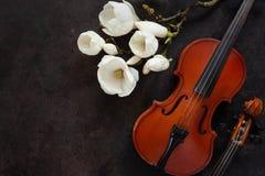 2 старых скрипки и цвести brances магнолии Взгляд сверху, конец-вверх на темной винтажной предпосылке стоковые изображения rf
