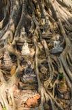 Статуи Будды на баньяне Стоковые Изображения RF