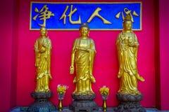 Статуи на 10 тысяч монастыре Buddhas в олове Sha, Гонконге, Китае стоковые фото