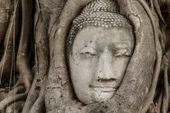 Статуя головы Будды стоковое фото