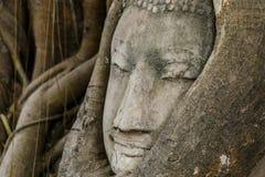 Статуя головы Будды стоковое фото rf