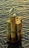 Статуя зайцев крепостью Питера и Пола Стоковая Фотография RF