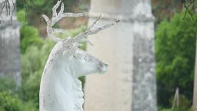 Статуя оленей в фокусе парка селективном акции видеоматериалы