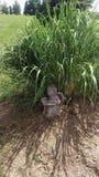 статуя сада flowerpot коровы смешная Стоковые Фото