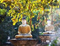 Статуя Buddhas стоковое фото