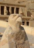 Статуя Horus на виске Hatshepsut в Египте стоковое изображение rf