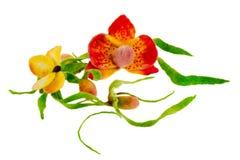 Статья от покрашенных бабочки и орхидеи шерстей Стоковые Фото