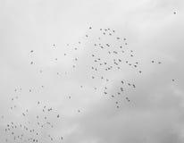 Стая летать птиц Стоковое фото RF