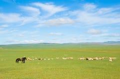 стая пася овец Стоковые Изображения