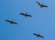 стая пера птиц совместно Стоковые Фото
