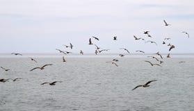 стая птиц над морем стоковое фото
