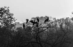 Стая птиц Стоковое Фото