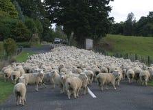 стая табунит овец дороги Стоковые Изображения