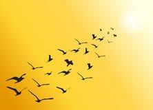 Стадо вектора летящих птиц к яркому солнцу Стоковая Фотография