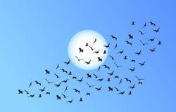 Стадо вектора летящих птиц к яркому солнцу Стоковые Изображения RF