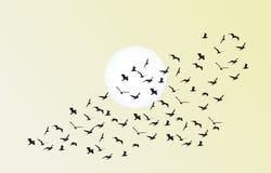 Стадо вектора летящих птиц к яркому солнцу Стоковая Фотография RF