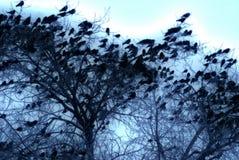 Стадо вложенности ворона на дереве Стоковое Изображение RF