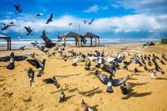 Стадо голубей оно шумно уходит стоковое фото