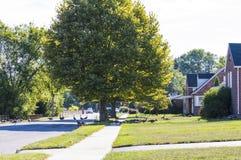 Стадо гусынь идя вниз с улицы и через дворы Стоковая Фотография RF