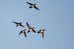 Стадо деревянных уток летая в голубое небо Стоковые Фотографии RF